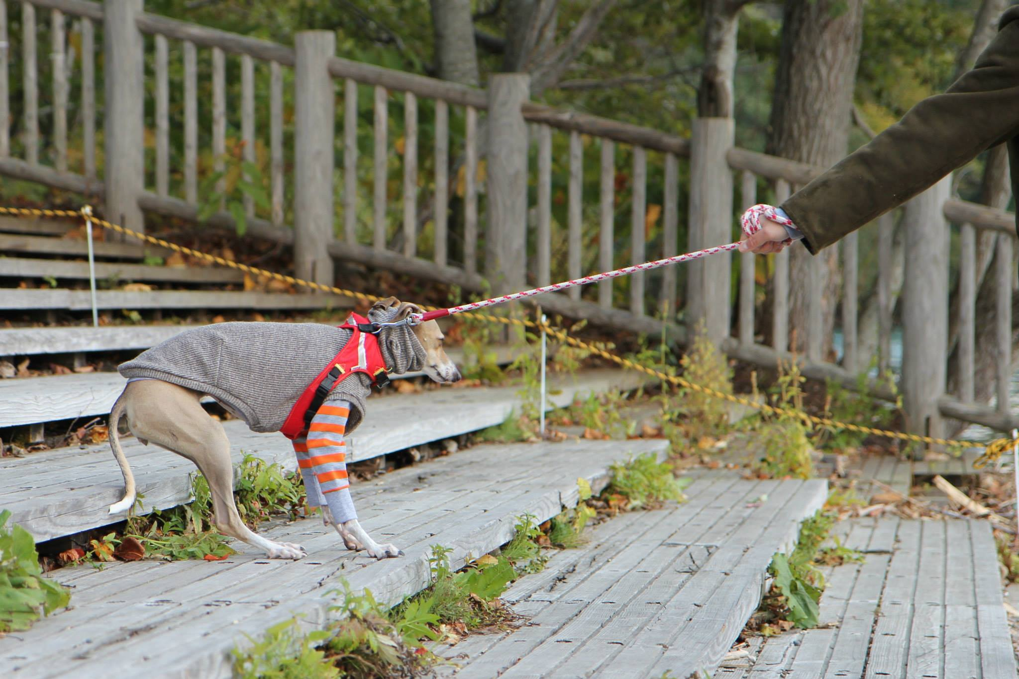 Ridicuul geklede hond wil niet het water in bij Lake Shikotsu