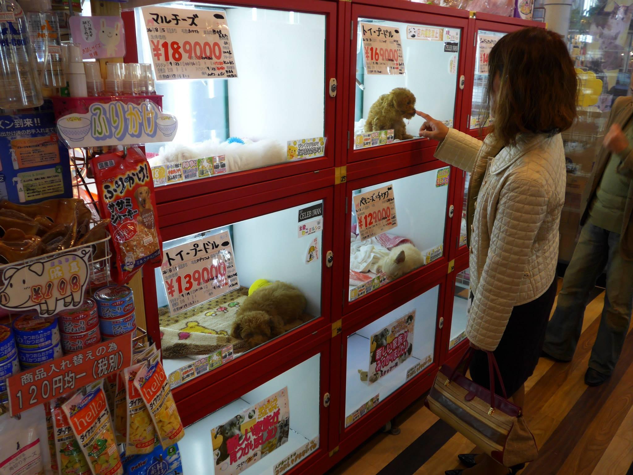 Hondjes te koop in Hiroshima