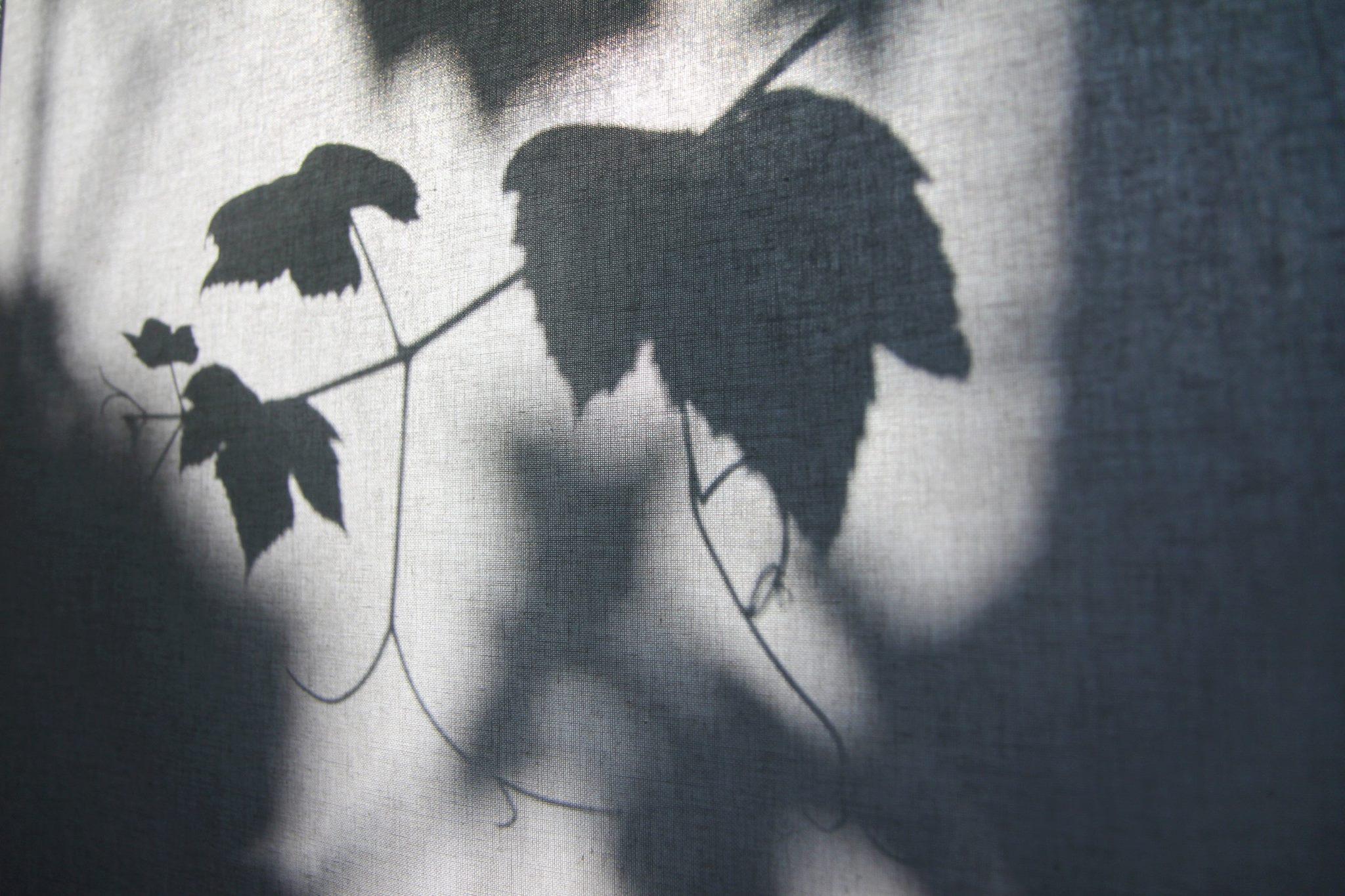 Bijna afvallende herfstbladeren van de druivenstruik door het rolgordijn heen