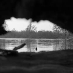 Doorkijkje bij een stuk wrakhout in het water